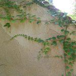 humidité dans les murs que faire