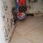 assèchement humidité murs