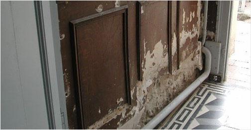 Les causes d'apparition de salpêtre, moisissure, mérule, champignons sur vos murs