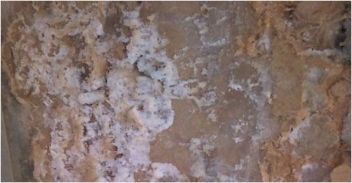 Conséquences de salpêtre, moisissure, mérule, champignons sur votre maison